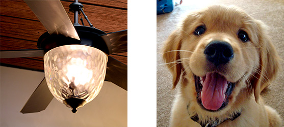 An outdoor ceiling fan is like a golden retriever